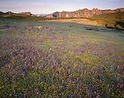 Spring, Sunset, Wildflowers, Flowers, High Peaks, Pinnacles, Pinnacles National Monument, California , Pinnacles National Park,