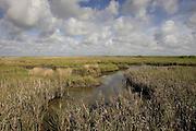 Salt Marsh; San Bernard NWR, Gulf Coast, Texas