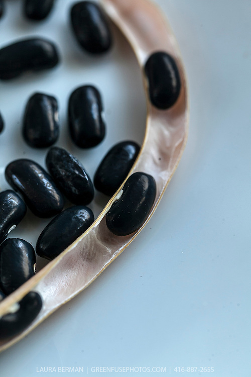 Dried Black Valentine beans. They are an old heirloom variety first introduced in the 1850's and can be eatern fresh or dried.