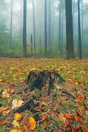 Lock Raven Reservoir, trees, fog,fall