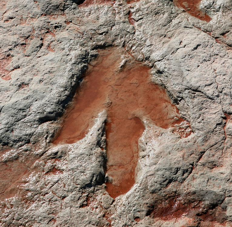 Photo by Gary Cosby Jr.  ..Dilophosaurus tracks dot the rocks in an area near Tuba City, Arizona.