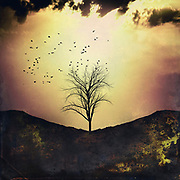 Tree silhouette at sunset - composite image