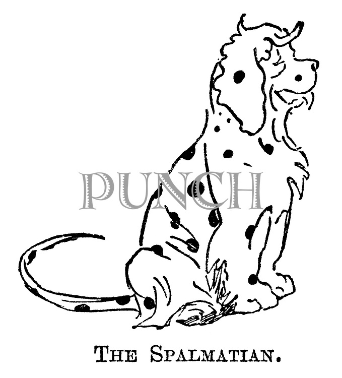 The Spalmatian.