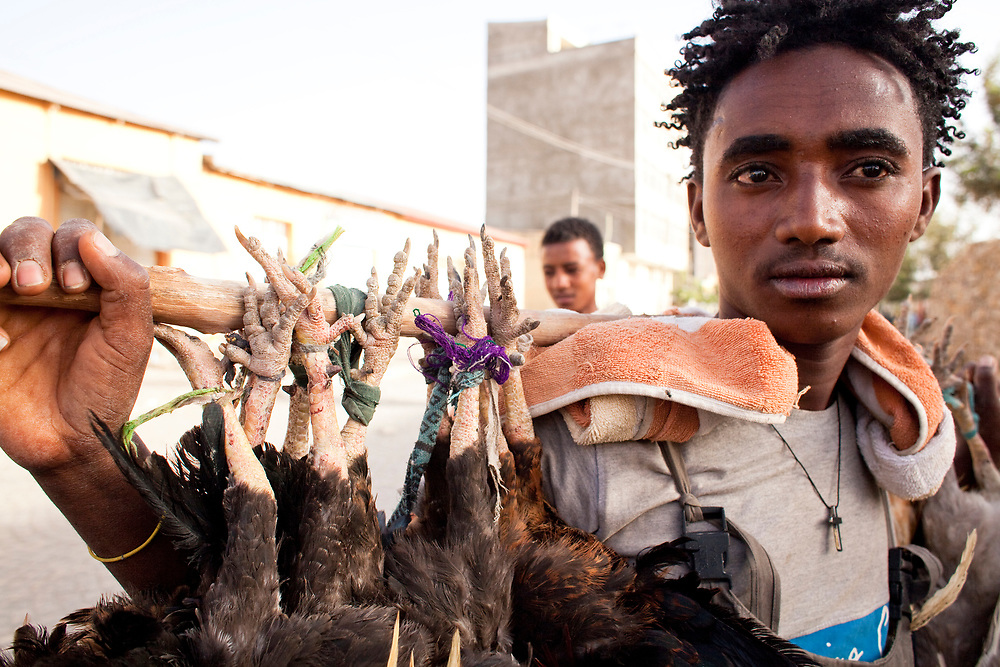 Young rural man selling live chickens on the street in Mekelle at the end of the Lenten fast. Doro Wat, or chicken stew, is traditionally eaten on Easter Friday to break the long fast.