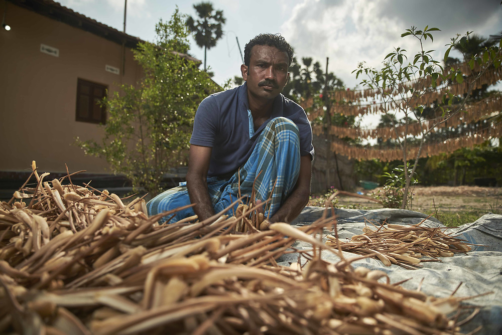 Freshly extracted pile of kotta kilangu is sorted before being hung out to dry in this household in Delft East. © Reza Akram / DFAT 2017
