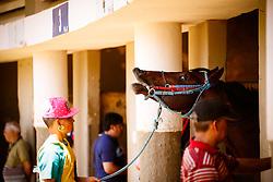Bastidores da Reunião 206, no Jockey Club do Rio Grande do Sul. FOTO: Emmanuel Denaui/ Agência Preview