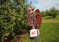 Steve and Nikki Kolb pick apples at Stone Brook Farm in Gilford on Thursday afternoon.  (Karen Bobotas/for the Laconia Daily Sun)