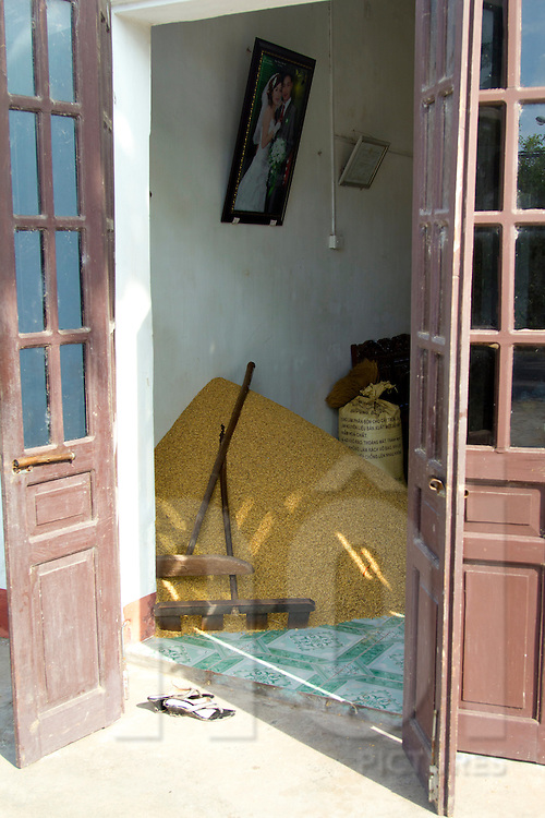 Rice seeds are kept inside house to storage, Nam Dinh province, Vietnam, Asia.