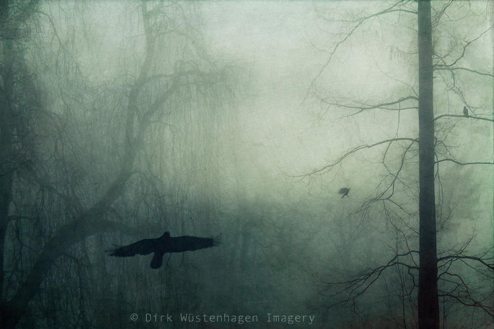 Misty landscape with birds - textured photograph<br />