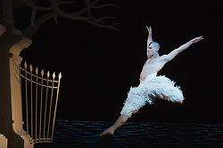 © Licensed to London News Pictures. 05/12/2013. London, England. Pictured: Jonathan Ollivier as The Swan. Matthew Bourne's Swan Lake is performed at Sadler's Wells Theatre from 4 December 2013 to 26 January 2014. Photo credit: Bettina Strenske/LNP
