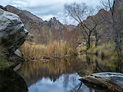 Reflections in the calm waters of Sabino Creek on a cool winter day.