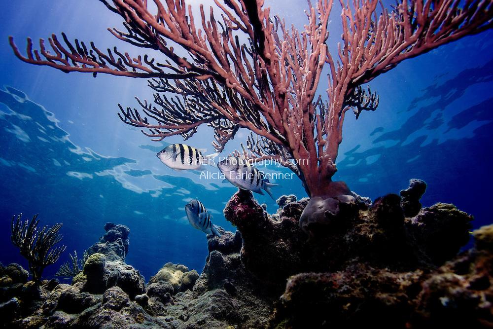 Florida Keys marine life reef fish