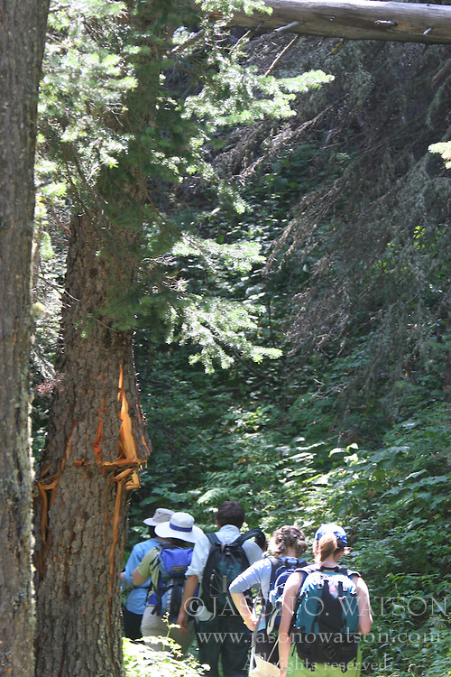 Hikers along a trail in Glacier National Park, Montana