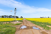 Windmill in a field of canola crop, next to a dirt track in Inverleigh, rural country Victoria, Australia.