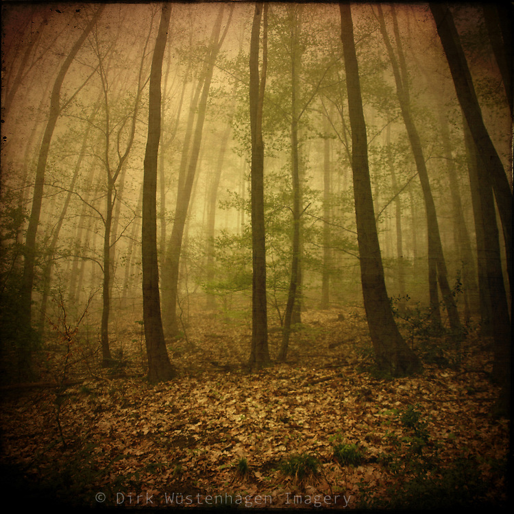 Moody forest in spring<br />