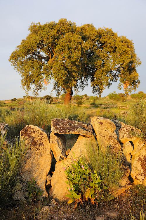 Cork oak, Faia Brava reserve, Côa valley,.Portugal
