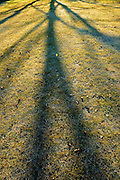 Tree shadows on grass in urban park. Early morning autumn with frost<br /> Winnipeg<br /> Manitoba<br /> Canada