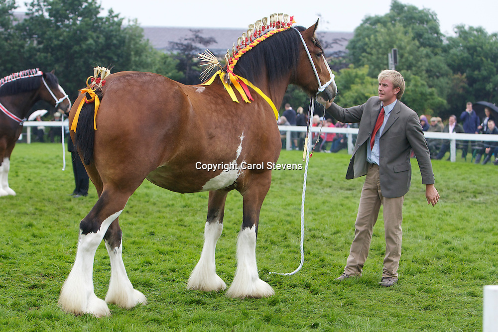 Mr R Bedford's Bay Mare  6 yrs  f 2006<br />