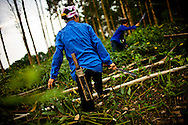 Workers cut down trees to make room for more crops in the northern mountains of Vietnam.