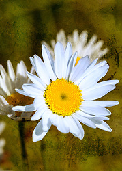 To me it seems this daisy it trying to tell a story