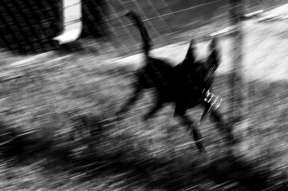 A dog barks from behind a fence in Gary, Indiana. (© William B. Plowman/Redux)