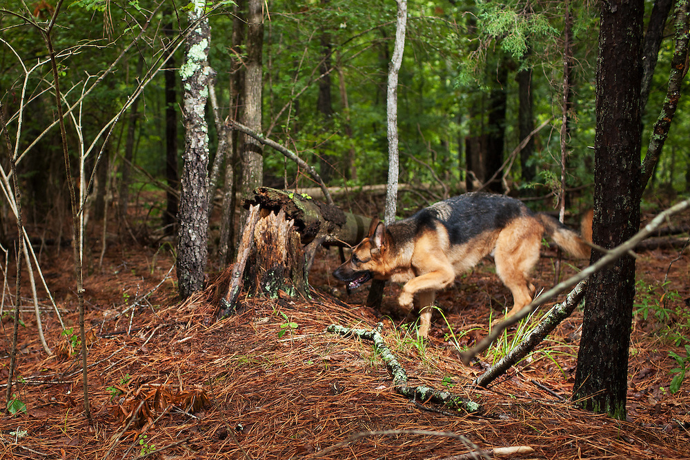 Author Cat Warren and Solo, a cadaver dog, training near the Eno River in Durham, North Carolina, Friday, July 8, 2011.