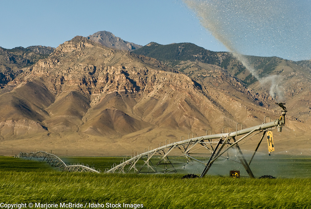 Pivots water green wheat field during summer with the Lemhi mountain range beyond in the Little Lost river valley near Mackay, Idaho
