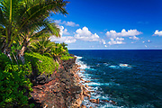 Surf and palms along the Puna Coast, The Big Island, Hawaii USA