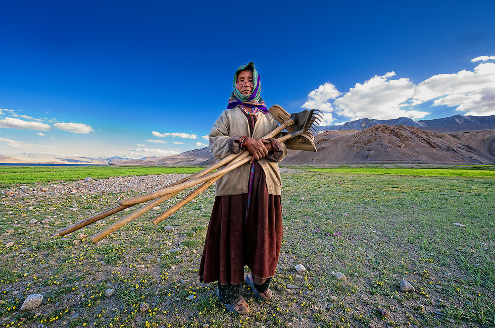Taken in the village Korzok, situated on the bank of lake Tso Moriri in Ladakh, while this lady was going back to her home after working for some time in the fields...<br /> You can see the various agricultural implements which these people use in the fields...<br /> At 4600 mtrs. above the sea level, these are said to be the highest fields of the world...