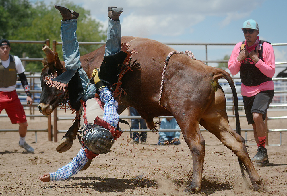 "Julian Perales, 13, of Albuquerque, falls off a young bull during the mini bull riding competition during the BernCo Bernie Sheep Day and First Impression Youth Rodeo, Saturday, August 5, 2017, at Bernalillo County's Dennison Park Rodeo Grounds in the South Valley. This is the fourth year for the annual event. ""I think it's fun,"" said Perales about his second mini bull ride. (Marla Brose/Albuquerque Journal)"