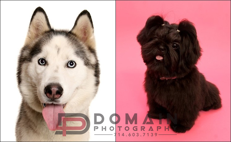 Pet Portrait Photography by DOMAIN Photography - Los Angeles, Orange County, LA, OC, CA, Anaheim