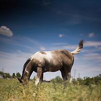Feeding Horse - West Odessa, Texas