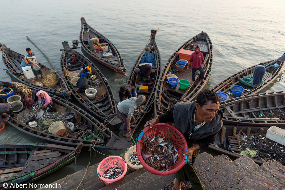 Fisherman carries days catch up from boats below, Sittwe