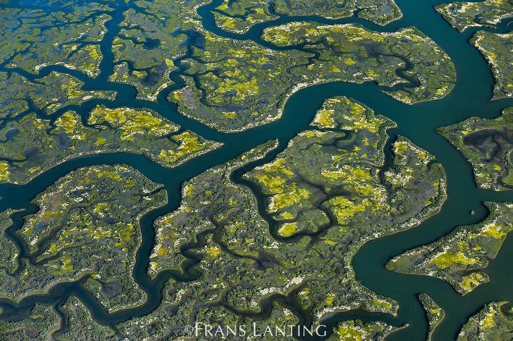 Tidal creeks in salt marsh (aerial), Elkhorn Slough, Monterey Bay, California