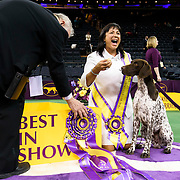 "February 16, 2016 - New York, NY : ""Vjk-Myst Garbonita's California Journey,"" a Pointer (German Shorthaired), with her handler, poses for pictures after winning Best in Show in the 140th Annual Westminster Kennel Club Dog Show at Madison Square Garden in Manhattan on Tuesday evening, February 16, 2016. CREDIT: Karsten Moran for The New York Times"