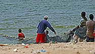 Seine netting, or purse netting, from the beach, M'bour, Senegal.  Beach seine netting is where a long net is drawn out in a large semi-circle, enclosing an area of sea, and then hauled in at both ends.  The top of the net carries floats, the bottom is weighted so it hangs like a curtain in the water.  The nets on M'bour beach are laid from a small rowing boat, laying in a large arc up to about 100 metres from the shore then bring the end of the net back ashore.  Men and boys on the beach then slowly haul the net back to the beach.  Once the net of close to the shore they are joined by women and small children who help gather up the catch of small fish.