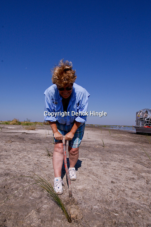 Bonnie with Marsh Rider Magazine helps in replanting marsh grass and plants in the Big Branch National Wildlife Refuge in St. Tammany Parish near Lacombe, La.