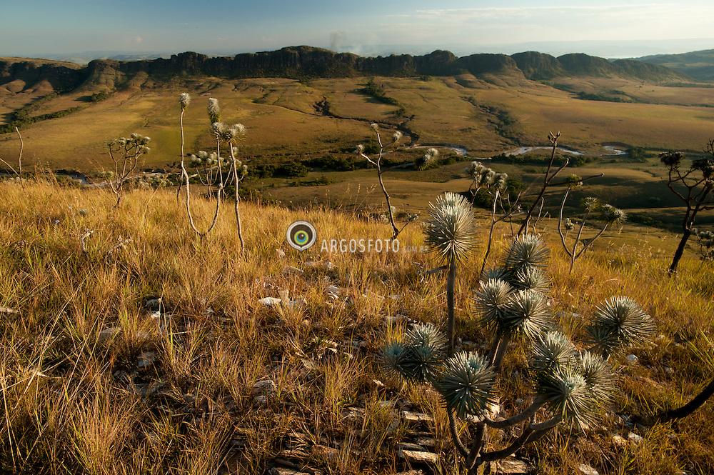 Parque Nacional da Serra da Canastra, um dos mais importantes parques nacionais brasileiros. Esta localizada no centro-sul do estado de Minas Gerais. Apresenta uma vegetacao bem variada, com a presenca de gramineas, ciperaceas, xiridaceas, eriocaulaceas e arvores de pequeno e medio porte, de cascas grossas e galhos retorcidos bem caracteristica do cerrado./ The National Park of Serra da Canastra is one of the most important national parks in Brazil. It is located in south-central state of Minas Gerais. It presents a very varied vegetation, the presence of grasses, sedges, xiridáceas, eriocauláceas. trees of small and medium-sized, thick bark and gnarled branches very characteristic of the cerrado.