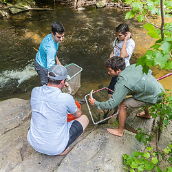 Scientists from the Gulf of Maine Research Institute catch alewives during their spring spawning run on from Mill Brook in Westbrook, Maine.