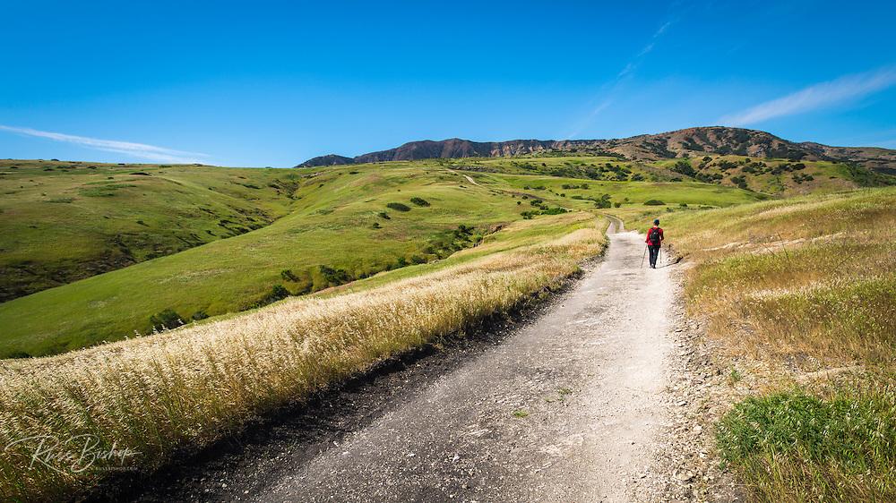 Hiking above Smuggler's Cove, Santa Cruz Island, Channel Islands National Park, California USA