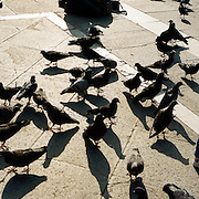 Young children feed the pigeon's in Piazza San Marco. Venice, Italy. 1st May 2011. Photo Tim Clayton