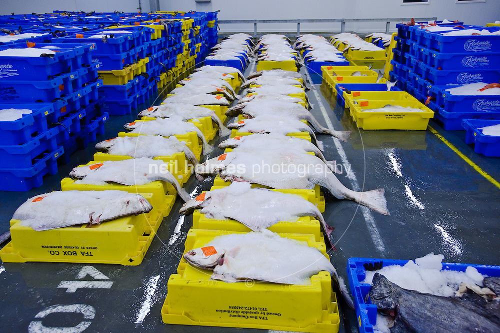 'Fishgate' Hull Fish Auction