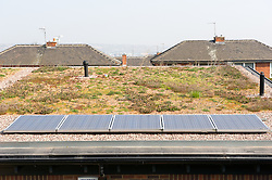 New build social housing with solar panels, Yorkstone Place, Wyburn Estate, Sheffield