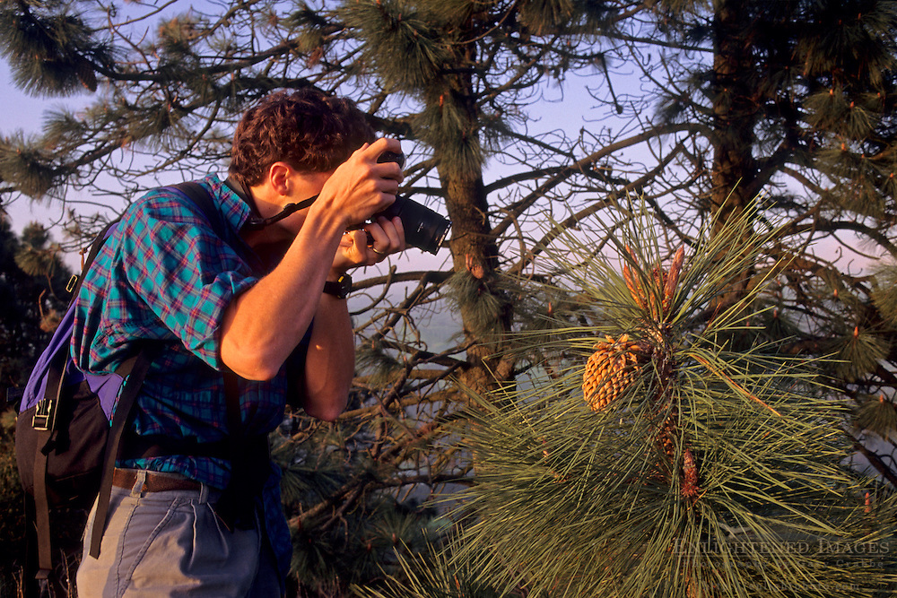 Nature photographer shooting a pine cone, Tilden Regional Park, Berkeley Hills, CALIFORNIA