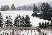 Winter snow over WillaKenzie Estate Vineyards, Yamhill-Carlton, Willamette Valley, Oregon
