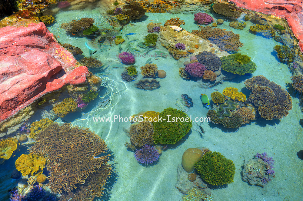 Coral Reef ecosystem, Red Sea Eilat Israel as seen from above