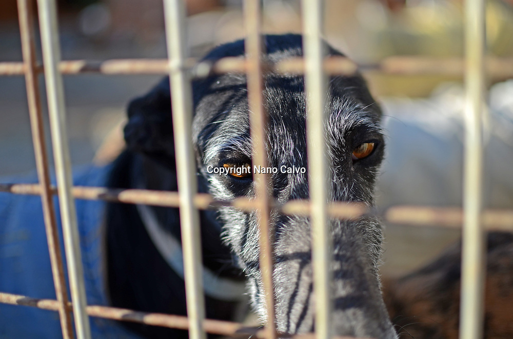 Visit to Las Nieves, a dog shelter that acommodates more than 700 dogs and 400 greyhounds. After healing and preparing them, they send the greyhounds to Belgium, where they are adopted by a new family.