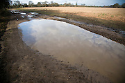 The water cycle. Cloud and sky reflected in large puddle in countryside, Shottisham, Suffolk, England