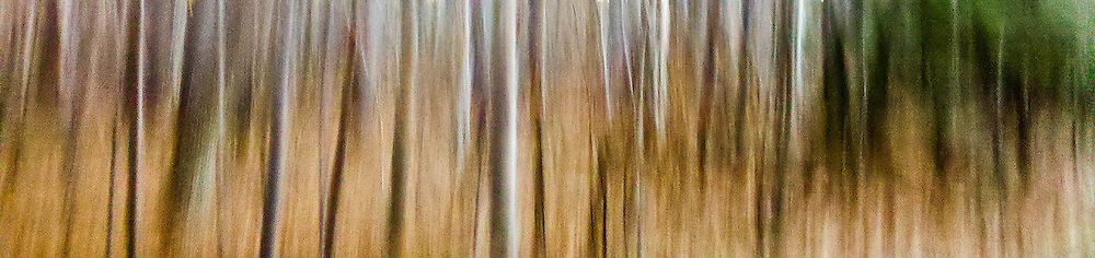 Cell phone shot of trees in fall panned at a very rapid rate to create blur. Printed on watercolor paper.