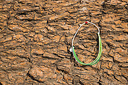 Pura Vida bracelet; Joshua Tree National Park, California.